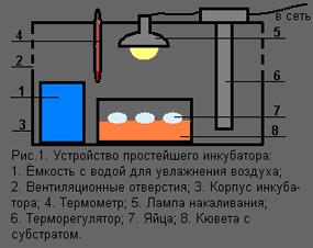 Самый простой инкубатор своими руками в домашних условиях